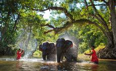 Tajlandia: kąpiel ze słoniem